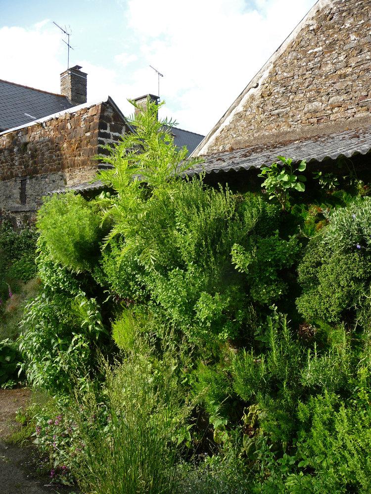mur v g tal de plantes ar matiques chez no mie vialard dol de bretagne mur vegetal patrick blanc. Black Bedroom Furniture Sets. Home Design Ideas