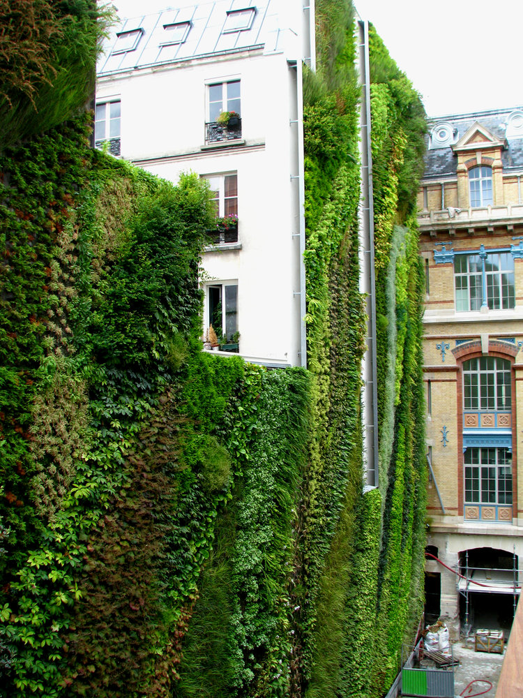 Rue d 39 alsace mur vegetal patrick blanc for Decoracion muros exteriores