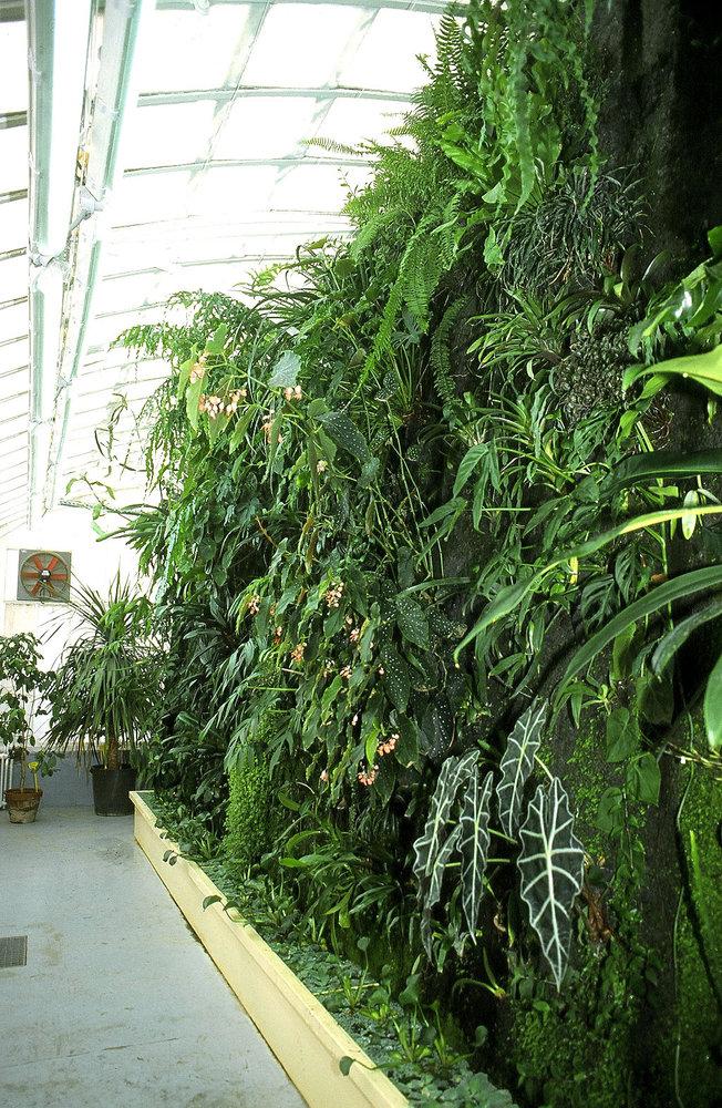 Serre du jardin botanique de toulouse mur vegetal for Serre de jardin adossee au mur