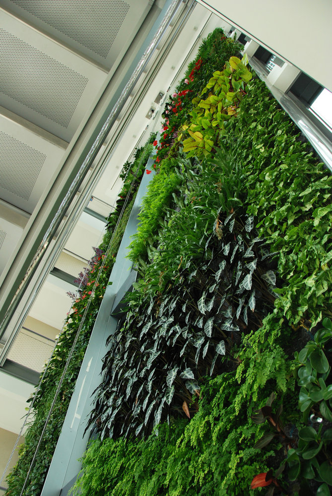 Green office meudon mur vegetal patrick blanc - Blanc de meudon prix ...