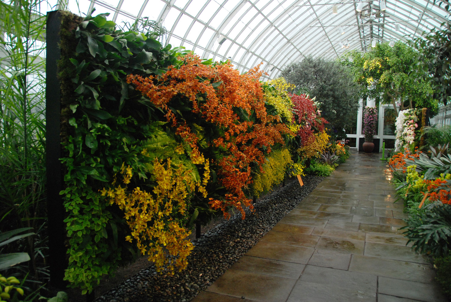 New York Botanical Garden, Orchid Show By Patrick Blanc, The Orchid Corridor