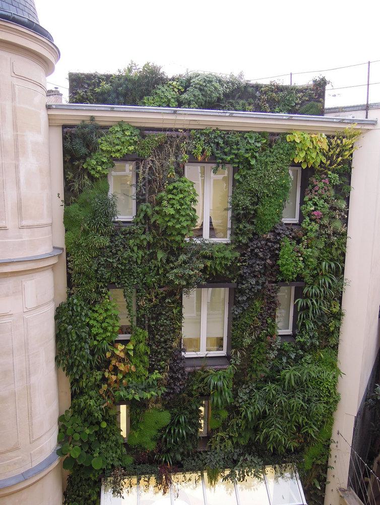 boutique azzedine ala a paris 5 rue de marignan mur vegetal patrick blanc. Black Bedroom Furniture Sets. Home Design Ideas