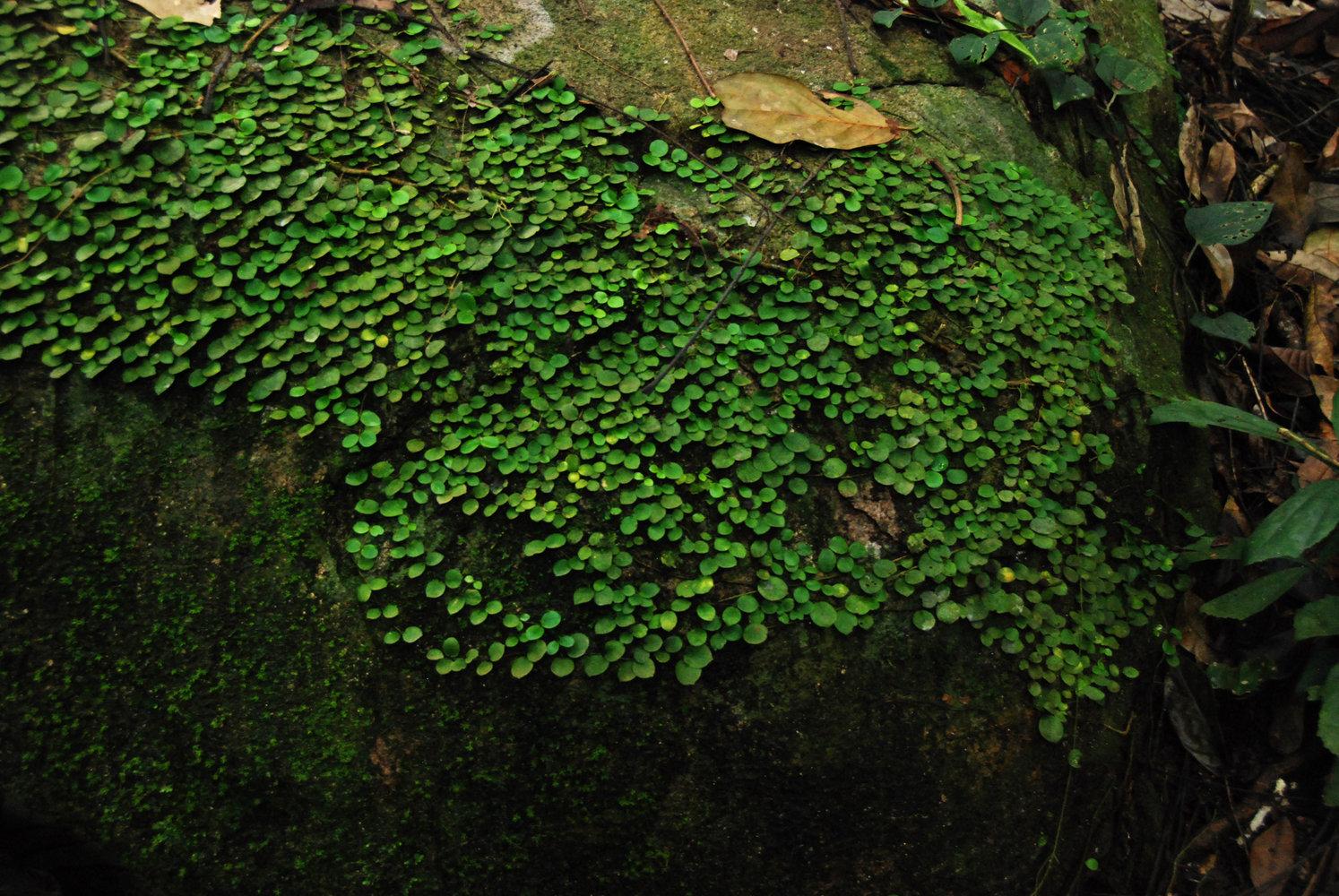 Architectures v g tales mur vegetal patrick blanc - Patrick blanc mur vegetal ...